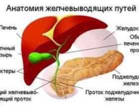 Гіпотонія жовчного міхура фото