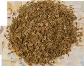 Як правильно заварювати насіння кропу, якщо у вас цистит? фото