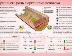 Особливості харчування людей похилого віку - чи потрібен жир в раціоні? Про холестерин фото