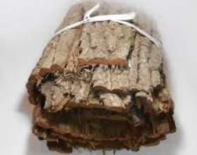 Якими корисними властивостями володіє кора дуба для чоловіків? фото