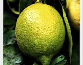 Денний стаціонар і тиску лимоном фото
