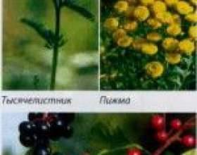 Відвари трав для профілактики глистів фото