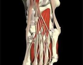 Причини болю в пальцях ніг фото